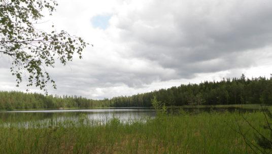 järvimaisema, edustalla järvikasvillisuutta