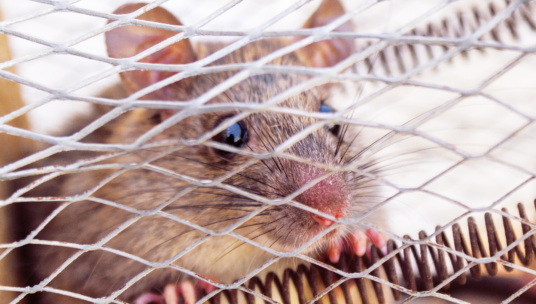 hiiri verkkoaidan takana