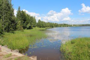 Kuvassa sininen joki, raikkaan vihreää rantakasvillisuutta ja rantapuustoa. Aurinko paistaa.