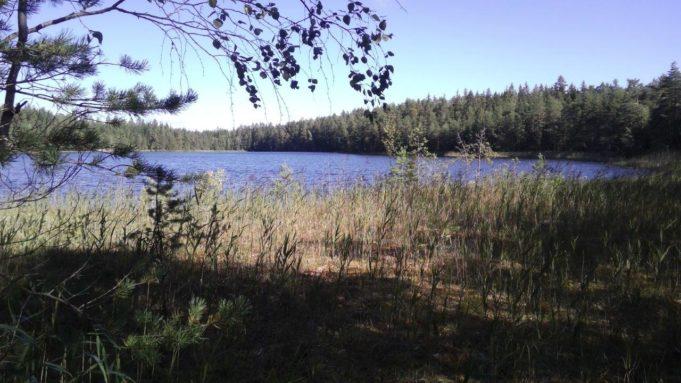 Kuvassa Kalalammen sininen vedenpinta. Etualalla puun oksia ja kaislikkoa. Taivas on kirkas.