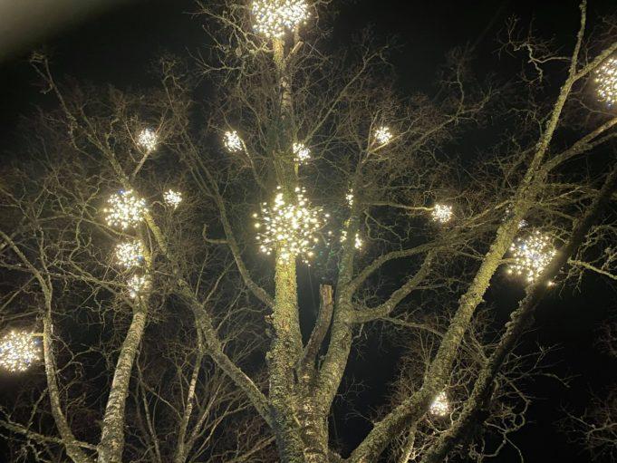 jouluvaloja puussa