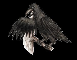 Piirroskuva mustasta Kaarne -korpista