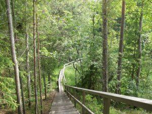 Kuvassa puiset portaat alaspäin. Alhaalla polku jatkuu pitkospuina ja kaartuu oikealla vehreässä metsässä.