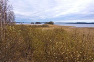 Kuvassa järvi taustalla. Etualalla rantakasvillisuutta, pensaita ja kaislaa. Taivas on pilvinen.