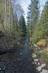 Kuvassa kivikkoinen leveä puro. Molemmin puolin rannoilla kuusia sekä lehtipuita, joissa uusia vaaleanvihreitä lehtisilmuja.