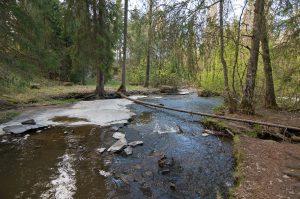 Kuvassa leveä kivikkoinen puro, jonka yli on kaatunut yksi puu. Puron reunoilla kuusia ja taustalla vaalean vihreitä lehtipuita.