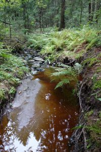 Kuvassa puro, jossa rusehtavaa vettä. Puron reunalla pieniä saniaisia.