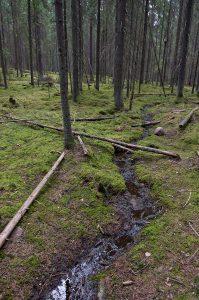 Kuvassa kuusimetsä, jossa sammaleinen aluskasvillisuus. Keskellä kiemurtelee pieni puro, jonka yli ja varteen on kaatunut muutamia puunrunkoja.