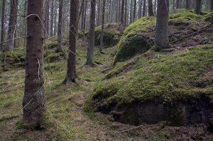 Kuvassa rinteessä puunrunkoja ja kivilohkareita. Sammaleinen aluskasvillisuus.