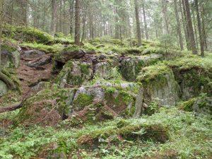 Kuvassa sammaleisia kivilohkareita. Taustalla sumuinen metsä.