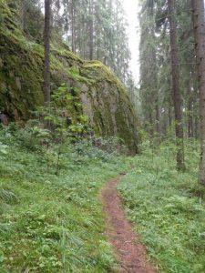 Kuvassa polku kulkee sumuiseen metsään. Polun molemmin puolin runsas vihreä kasvillisuus. Vasemmalla sammaleinen kallionreuna.