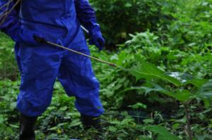 Kuvassa siniseen suojahaalariin pukeutunut henkilö ruiskuttaa jättiputken lehdelle ainetta