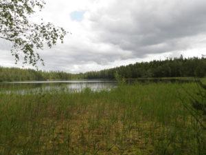 Kuvassa järvi ja etualalla runsaasti rantakasvillisuutta