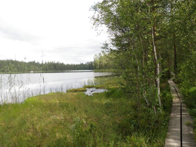 Kuvan vasemmassa reunassa pitkospuut kulkevat lehtipuumetsään  lammen rannassa. Taivas on pilvinen.