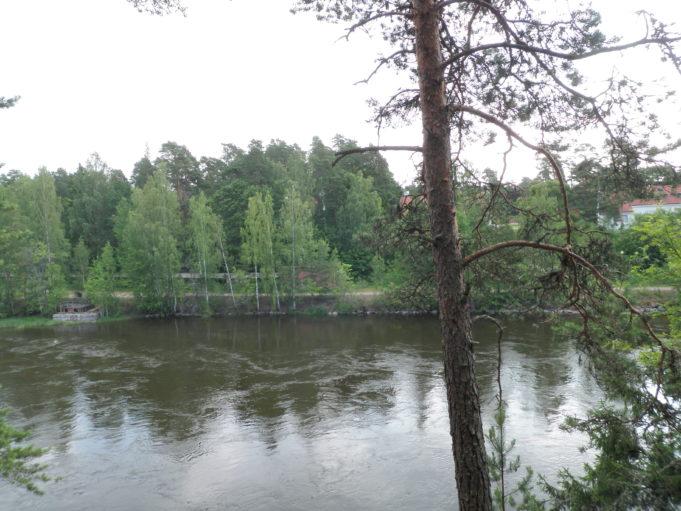 Kuvassa ylhäältä kalliolta kuvattu virtaava Kymijoki ja oikeassa reunassa suuri mänty. Vastarannalla lehtipuustoa ja tie.