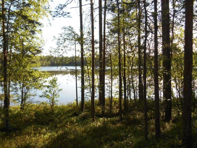 Kuvassa puiden välistä kiiltelee järven pinta.
