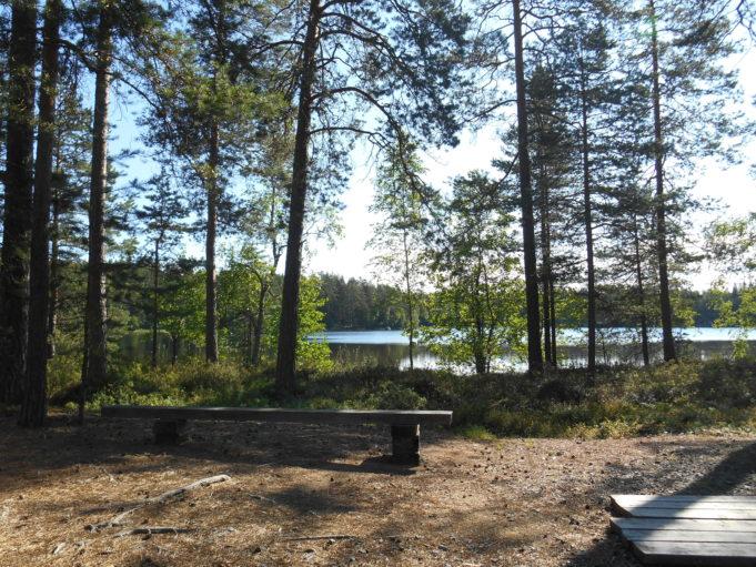 Kuvassa lankusta tehty penkki metsän reunassa. Taustalla puiden välistä kiiltelee järven pinta.
