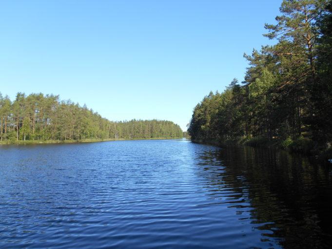 Kuvassa sininen järvi ja metsää rannoilla. Taivas on kirkkaan sininen.