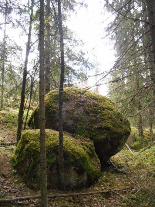 Kuvassa kaksi sammaleen peittämää kivenlohkaretta rinteessä. Ympärillä pieniä kuusen runkoja.