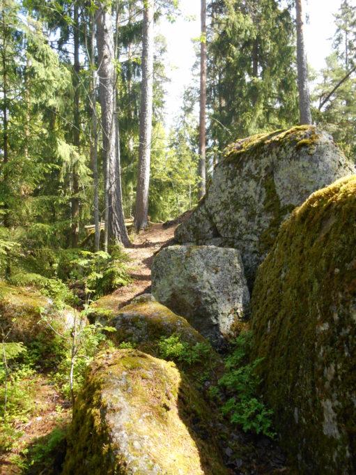 Kuvassa suuria sammalpeitteisiä kivenlohkareita. taustalla kuusia ja mäntyjä. Aurinko paistaa.