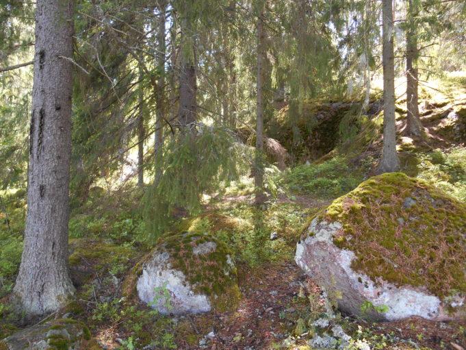 Kuvassa kuusia ja kivenlohkareita metsän rinteessä. Aurinko paistaa puiden välistä.