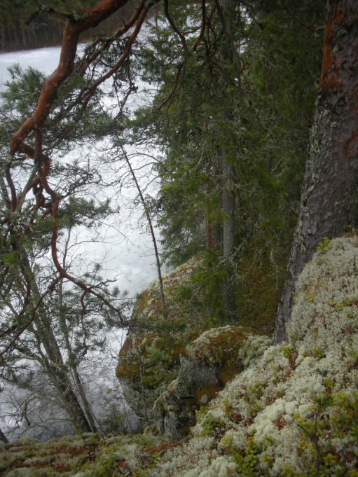 Kuvassa jyrkkä kallionreuna ja oikeassa reunassa männynrunko. Männyn oksat kuvan yläreunassa. Alhaalla kimaltaa järven pinta.