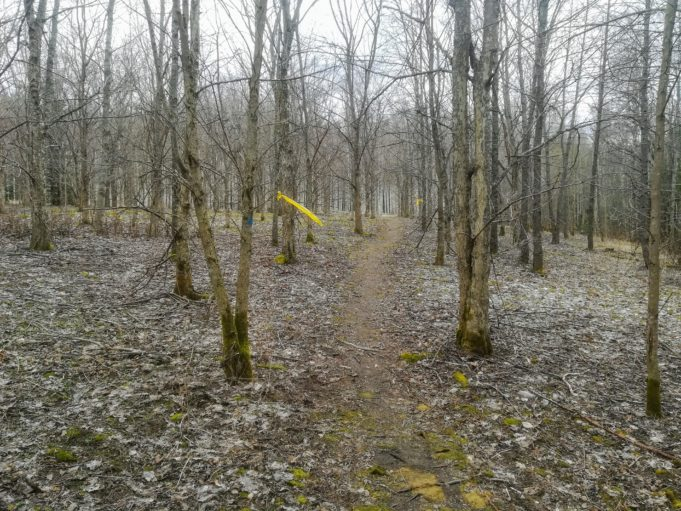 Kuvassa polku kulkee lehtipuumetsän keskellä. Harmaat lehdet ovat tippuneet maahan ja puut ovat paljaana. Sumuinen sää.
