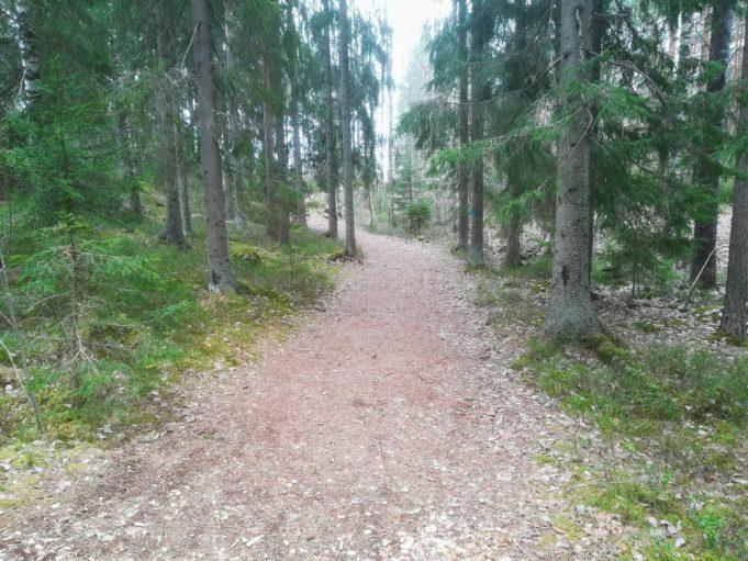 Kuvassa leveä polku johtaa kuusikkometsään.