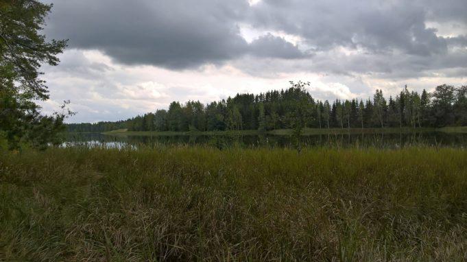 Kuvassa vesikasvillisuutta etualalla joen rannassa. Joen toisella puolella metsää. Pilvinen taivas.