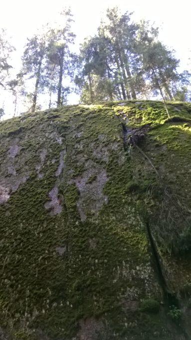 Kuvassa kallionseinämä kuvattu alhaalta päin. Kallion päällä kasvaa puita.