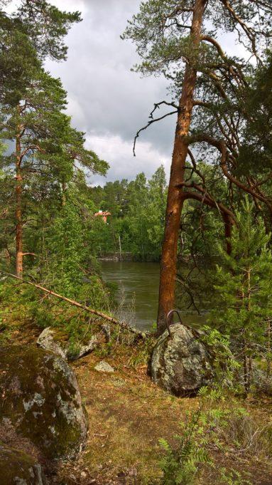 Kuvassa kaksi suurta mäntyä ja kolme kivenlohkaretta joen rannalla.