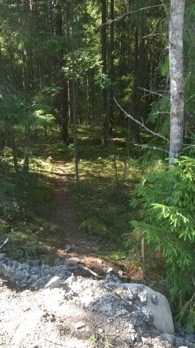 Kuvassa polku johtaa tiheään metsään. Aurinko paistaa puiden väliltä polulle ja puiden oksiin.