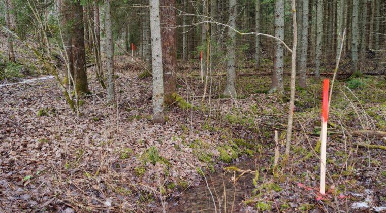 Ulkoilureitin linjaus on merkitty maastoon punaisin tikuin.