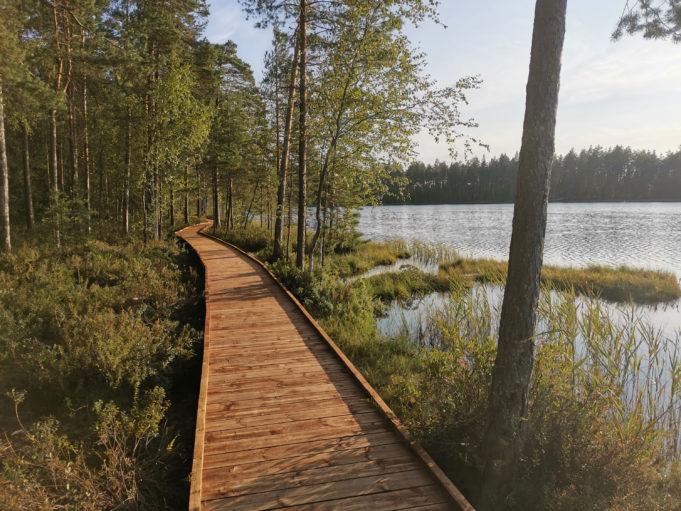 Kalalammen luontopolun pitkospuut rannalla, viressä Kalalampi.